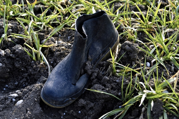 first lost shoe charles kenwright